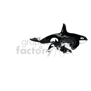 Killer Whale 08 mothertwin calves clipart. Royalty-free image # 391520