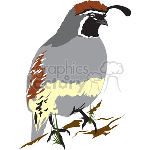 Wild Q bird clipart. Royalty-free image # 395001