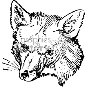 vintage fox head vector vintage 1900 vector art GF clipart. Commercial use icon # 402461