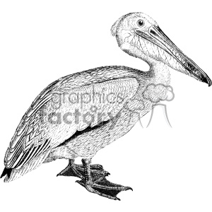 old vintage distressed pelican retro vector design vintage 1900 vector art GF clipart. Royalty-free image # 402481