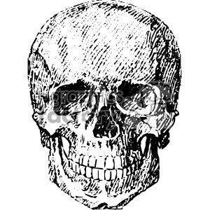 vintage vector skull art clipart. Royalty-free image # 403123