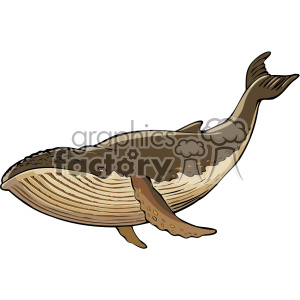 humpback whale clipart. Commercial use image # 132291