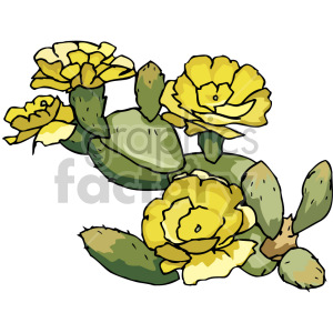 cactus flowers clipart. Royalty-free image # 151109