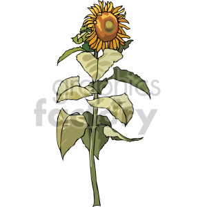 sunflower clipart. Royalty-free image # 151147