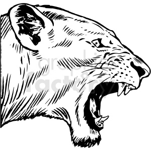 black and white realistic lion vector clipart