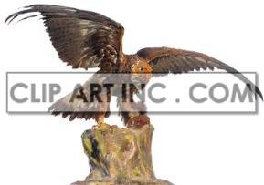 eagle bird of prey predatory birds animal imperialism   2a1021lowres photos animals