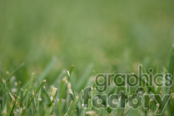 grass photo. Royalty-free photo # 390977