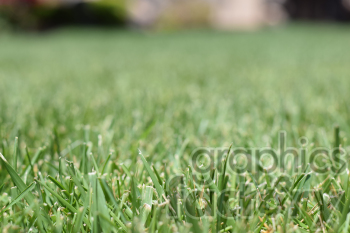 grass yard photo. Royalty-free photo # 390982