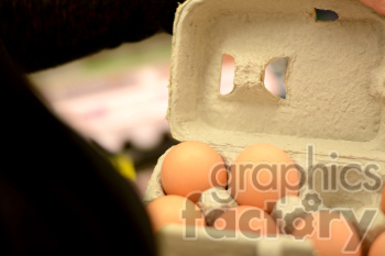 carton of eggs photo. Commercial use photo # 391222