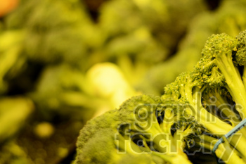 broccoli photo. Royalty-free photo # 391247