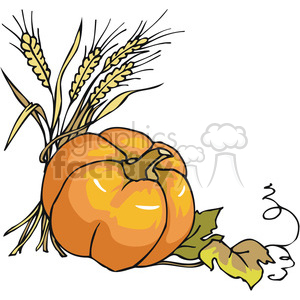 thanksgiving pumpkin with wheat clipart. Royalty-free image # 145507