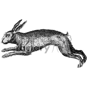 vintage rabbit hare vector vintage 1900 vector art GF clipart. Commercial use image # 402500