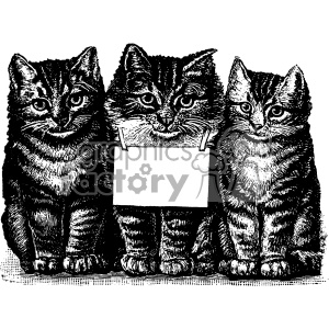 vintage retro old black+white cat cats banner sign three kittens animals tattoo