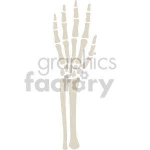 skeleton hand and forearm clipart. Royalty-free image # 408376