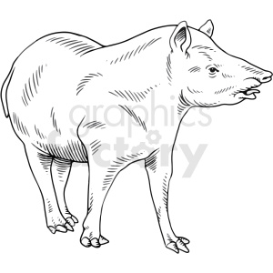 black and white wild boar vector clipart