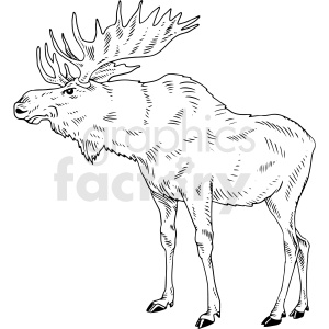 black and white moose vector clipart clipart. Commercial use image # 411475