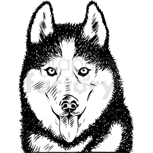 black and white realistic huskey vector clipart