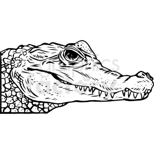black and white realistic alligator vector clipart