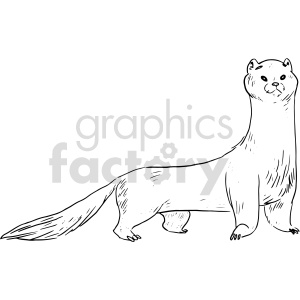 ferret black and white clipart clipart. Commercial use image # 414756