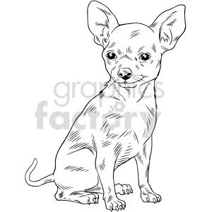 animals chihuahua dog black+white