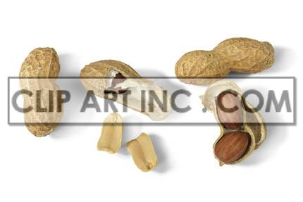 Peanuts photo. Royalty-free photo # 176926