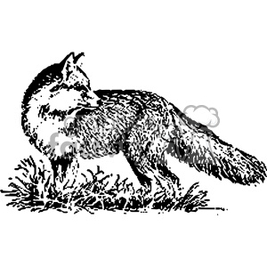 black and white fox vintage vector vintage 1900 vector art GF clipart. Commercial use image # 402439