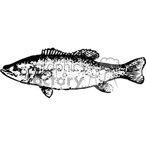 vintage distressed bass fish GF vector design vintage 1900 vector art GF clipart. Royalty-free image # 402459