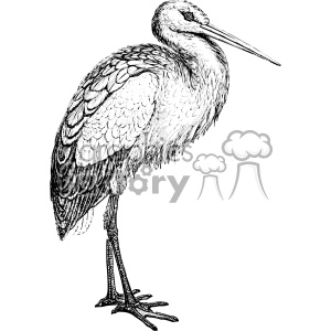 old vintage distressed stork retro GF vector design vintage 1900 vector art GF clipart. Royalty-free image # 402509