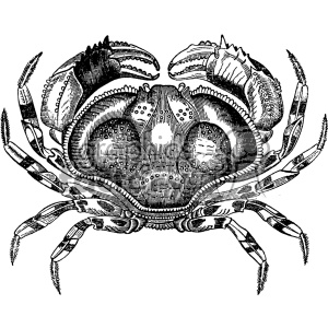 vintage retro old black+white crab sea+creature blue+crab tattoo