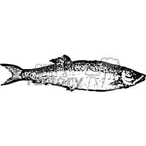 vintage distressed herring fish GF vector design vintage 1900 vector art GF clipart. Royalty-free icon # 402584