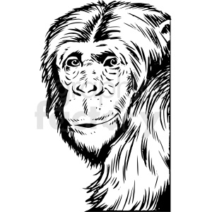 black and white realistic chimpanzee vector clipart clipart. Commercial use image # 413211