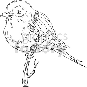 clipart - black and white bird vector clipart.