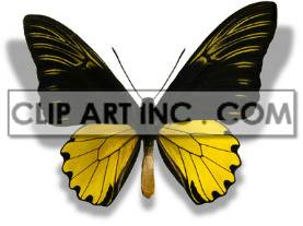 2A8510lowres clipart. Commercial use image # 176878