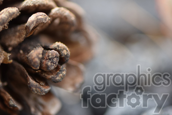 pine cone photo. Royalty-free photo # 390985