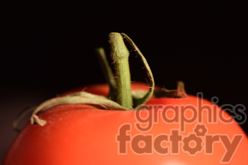 tomato photo. Royalty-free photo # 391130