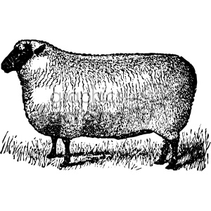 vintage retro old black+white sheep fat tattoo