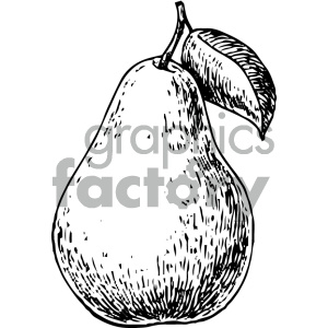 pear vintage art clipart. Commercial use image # 404138