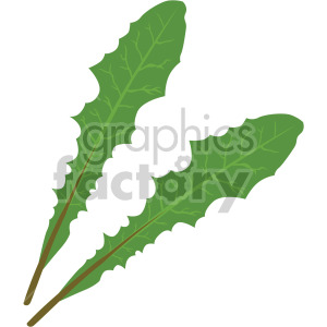 romaine lettuce leaves clipart. Royalty-free image # 408072