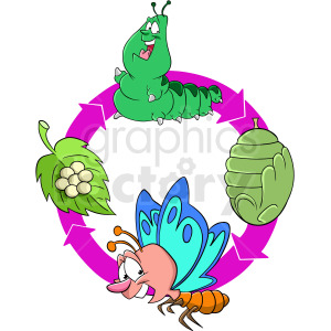 life cycle of caterpillar chrysalis to butterfly clipart. Commercial use image # 409278