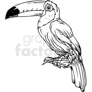 black and white tucan vector clipart