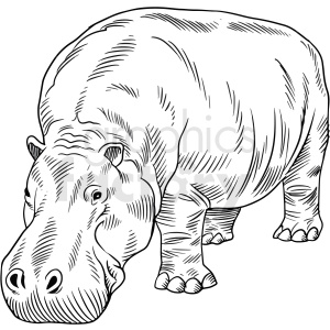 black and white hippopotamus vector clipart