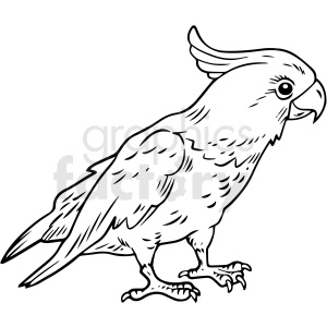 black and white realistic parrot vector clipart