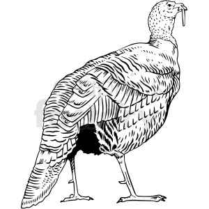 black white turkey vector clipart clipart. Royalty-free image # 412654