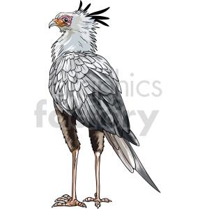 clipart - secretarybird vector graphic.