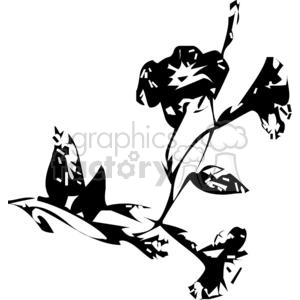 black and white orchids clipart. Royalty-free image # 380073