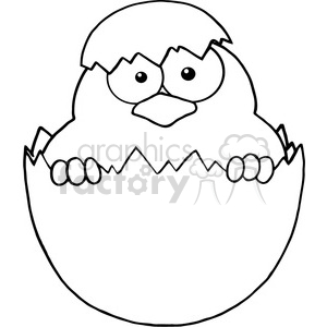 Royalty-Free-RF-Copyright-Safe-Surprise-Yellow-Chick-Peeking-Out-Of-An-Egg-Shell clipart. Royalty-free image # 384398