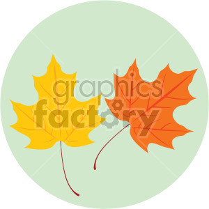 maple leaves on green circle background