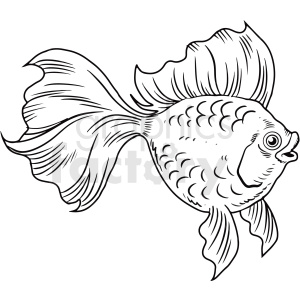 black white realistic betta fish clipart. Commercial use image # 411428
