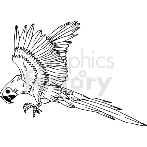 black and white parrot vector clipart clipart. Commercial use image # 411464