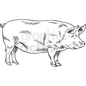 black and white realistic pig vector clipart clipart. Commercial use image # 411806